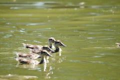 Pássaros bonitos Foto de Stock Royalty Free