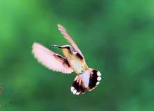 Pássaros bonitos Imagem de Stock Royalty Free