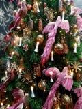 Pássaros bonitos com penas cor-de-rosa Fotografia de Stock Royalty Free
