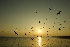 Pássaros bonitos do por do sol e de voo sobre o mar Imagem de Stock