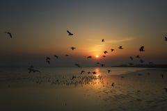 Pássaros bonitos do por do sol e de voo sobre o mar Foto de Stock Royalty Free