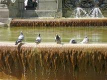 pássaros bonitos na fonte Imagem de Stock