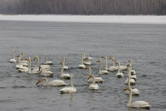 Pássaros bonitos na mola adiantada na praia Imagens de Stock