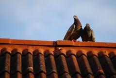 Pássaros bonitos no telhado em Tailândia Foto de Stock