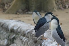 Pássaros bonitos que sentam-se em seguido Fotos de Stock Royalty Free
