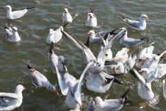 Pássaros brancos que tentam agarrar o alimento dado a eles foto de stock