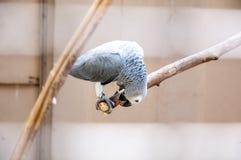 Pássaros brasileiros Fotos de Stock Royalty Free