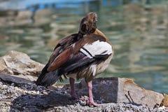 Pássaros coloridos 1 Foto de Stock