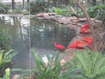 Pássaros coloridos brilhantes em jardins zoológicos & botânicos de Hong Kong imagem de stock royalty free