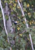 Pássaros coloridos entre as folhas de uma árvore Foto de Stock
