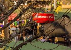 Pássaros coloridos nos ramos das árvores no centro da cidade Fotos de Stock Royalty Free