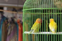 Pássaros coloridos para a venda no mercado do pássaro em Yogyakarta, Java, Indonésia Imagem de Stock Royalty Free
