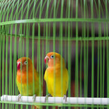 Pássaros coloridos para a venda no mercado do pássaro em Yogyakarta, Java, Indonésia Fotos de Stock Royalty Free