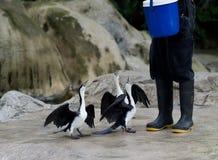 Pássaros com fome Imagens de Stock Royalty Free