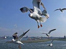 Pássaros com fome Imagem de Stock Royalty Free