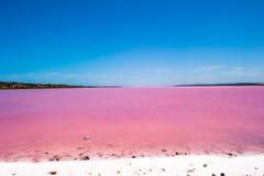 Pássaros cor-de-rosa de Austrália do lago fotos de stock