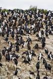 Pássaros - cormorões em rochas Foto de Stock Royalty Free