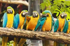 Pássaros da arara imagem de stock