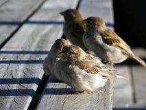 Pássaros da cidade Fotos de Stock Royalty Free