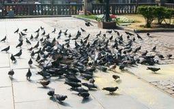 Pássaros da cidade Foto de Stock