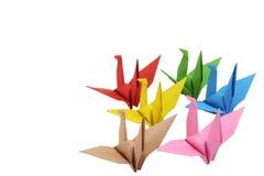 Pássaros da cor Fotos de Stock