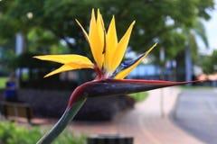 Pássaros da flor de Paradise ou do guindaste - opinião do close up fotografia de stock royalty free