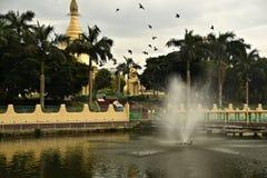 Pássaros da fonte e de voo perto de Maha Wizaya Pagoda em Yangon imagem de stock