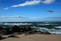 Pássaros da gaivota Fotos de Stock