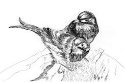 Pássaros da ilustração dois Ilustração do Vetor