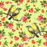 Pássaros da mola, flores românticas das rosas vermelhas Teste padrão sem emenda watercolor Fotografia de Stock