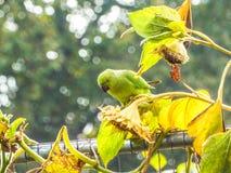 Pássaros da mosca fotografia de stock
