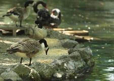 Pássaros de alimentação fotos de stock