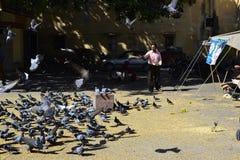 Pássaros de alimentação do homem no quadrado Fotos de Stock