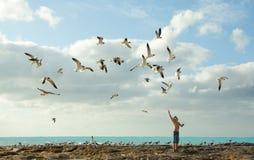 Pássaros de alimentação do menino Fotografia de Stock