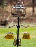 Pássaros de alimentação do quintal fotografia de stock royalty free