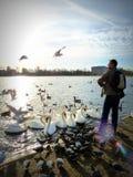 Pássaros de alimentação em Hyde Park, Londres Imagem de Stock