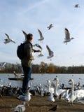 Pássaros de alimentação em Hyde Park, Londres Fotos de Stock