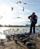 Pássaros de alimentação em Hyde Park, Londres Imagens de Stock Royalty Free