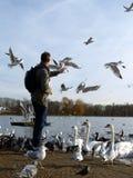 Pássaros de alimentação em Hyde Park, Londres Foto de Stock