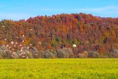 Pássaros de Autumn Landscape With Flock Of Fotos de Stock