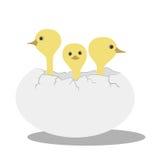 Pássaros de bebê ilustração royalty free