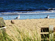 Pássaros de Bech Foto de Stock Royalty Free