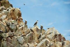 pássaros de descanso Imagens de Stock Royalty Free