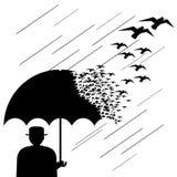 Pássaros de guarda-chuva Foto de Stock Royalty Free