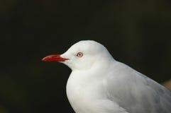 Pássaros de mar imagem de stock royalty free