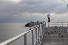 Pássaros de mar Fotos de Stock