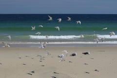 Pássaros de mar do verão Imagem de Stock Royalty Free