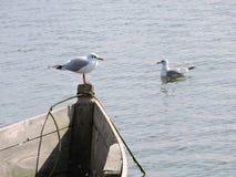 Pássaros de mar, Lituânia Imagem de Stock Royalty Free