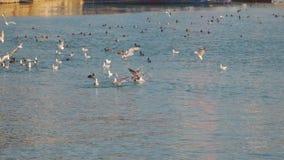 Pássaros de mar no mar filme