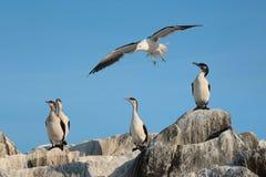 Pássaros de mar no sol fotos de stock royalty free